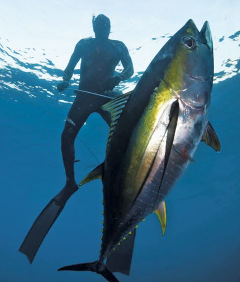 Spearfishing01